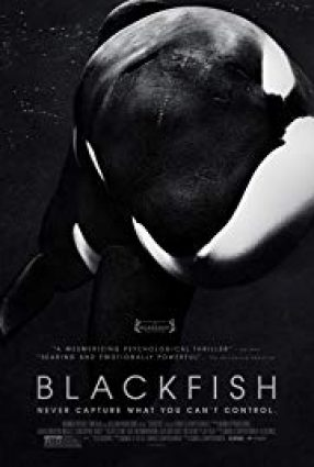 Cartaz do filme BLACKFISH – Blackfish: Fúria Animal