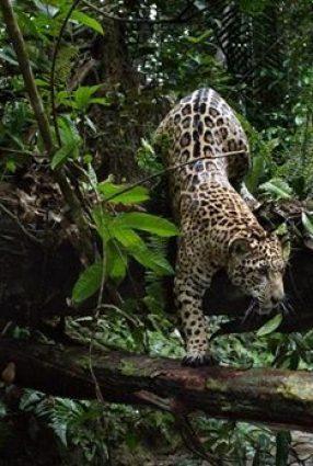 Cartaz do filme AMAZÔNIA